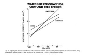 carbon cycle part geocosmic rex figure 3 the caption to this graph that appeared in the original article reads as follows ldquotypical gains of water use efficiency