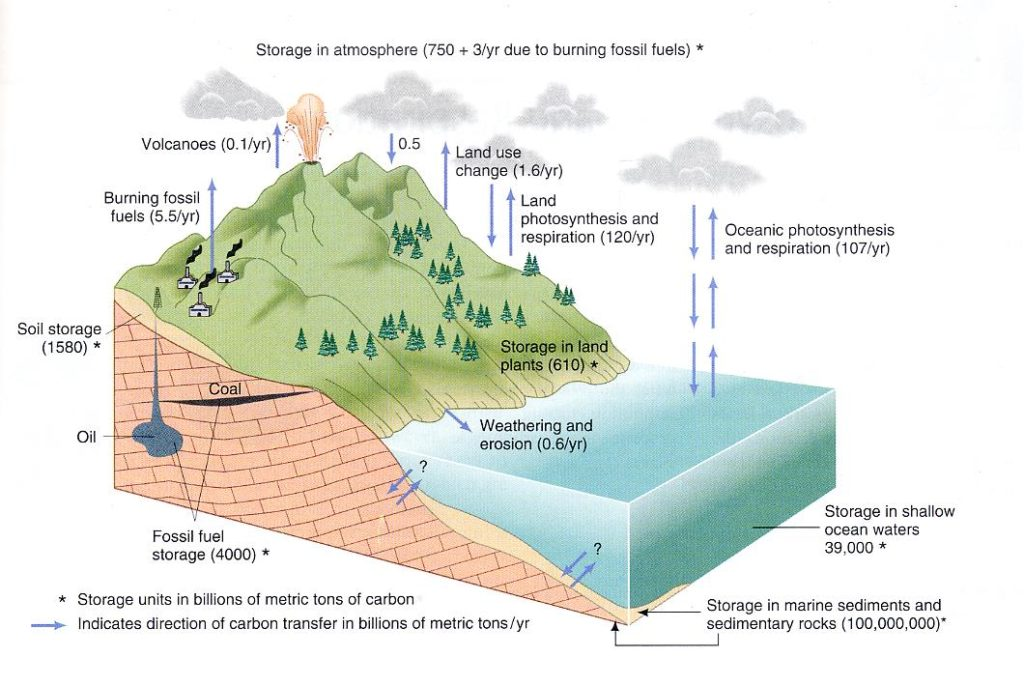 carbon cycle essay geocosmic rex finally note that we have an additional interesting piece of information in the second graphic the total amount of co2 residing in the atmosphere is given