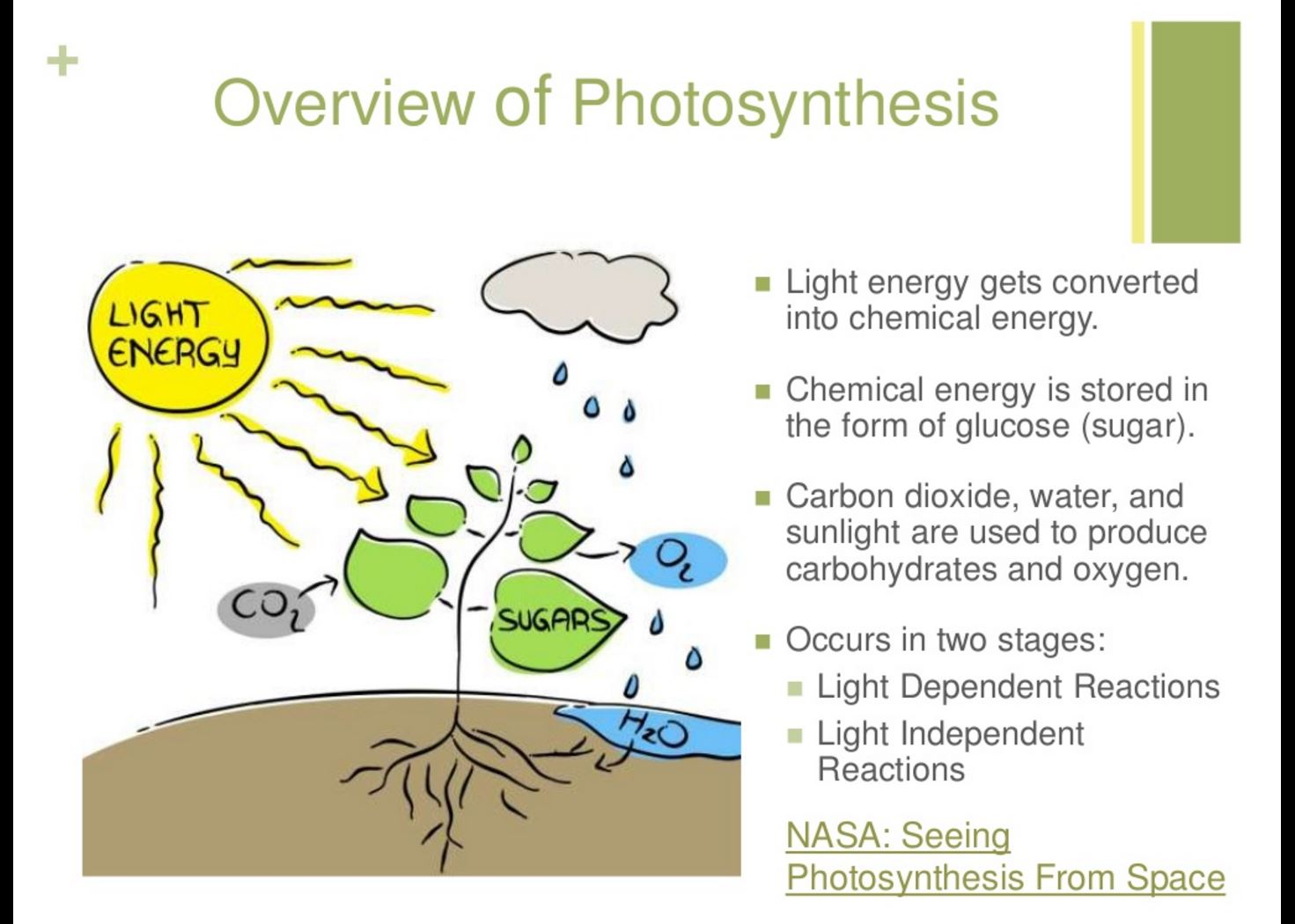 3 energy states of photosynthesis Cached